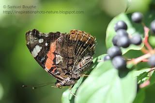 macro papillon gros plan
