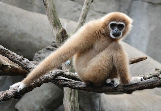 Freutag - Ein Tag im Zoo