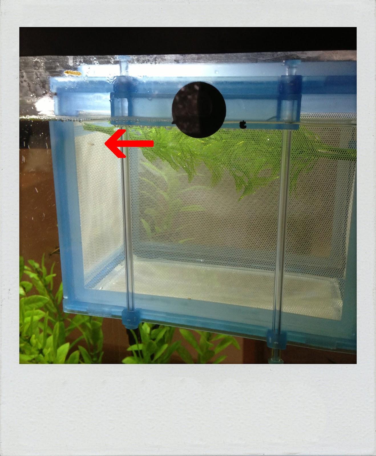 Lots o stotts baby fish for Toddler fish tank