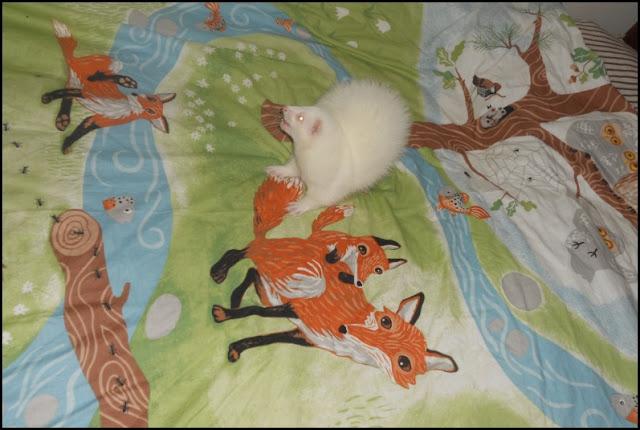 Fretti ferret