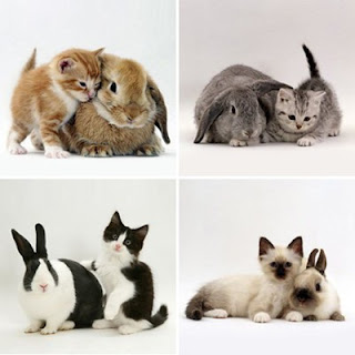 Kittens and Bunnies