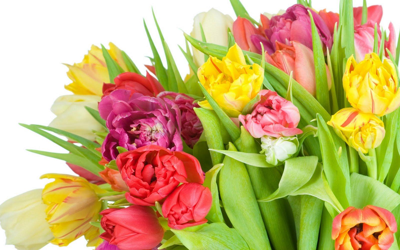 http://2.bp.blogspot.com/-i29PH_yiFt0/TcWM4aQdvLI/AAAAAAAAKqQ/qEmfslMTIqI/s1600/tulip-flowers_2560x1600_79956.jpg