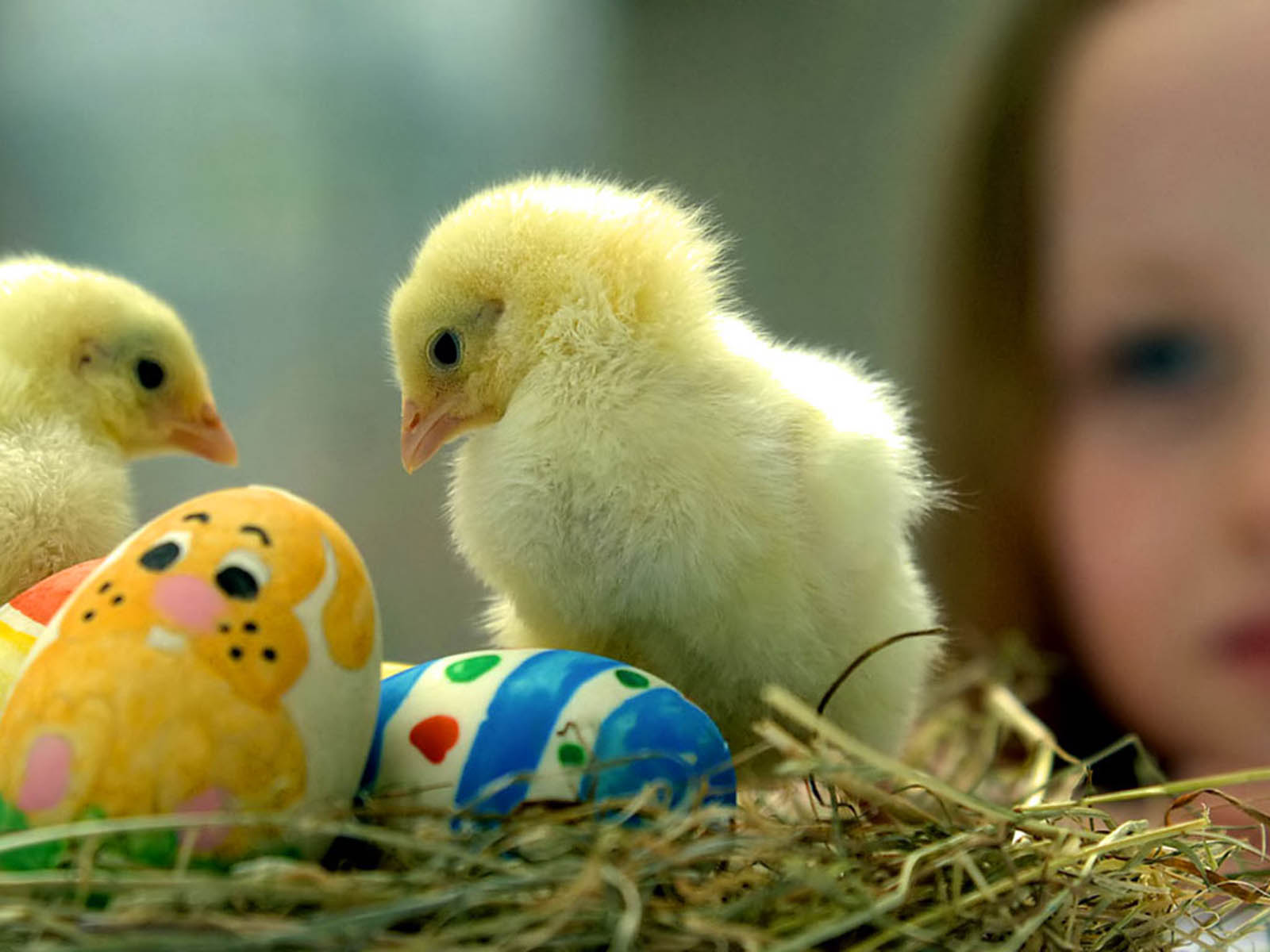 Funny Chicks Wallpapers