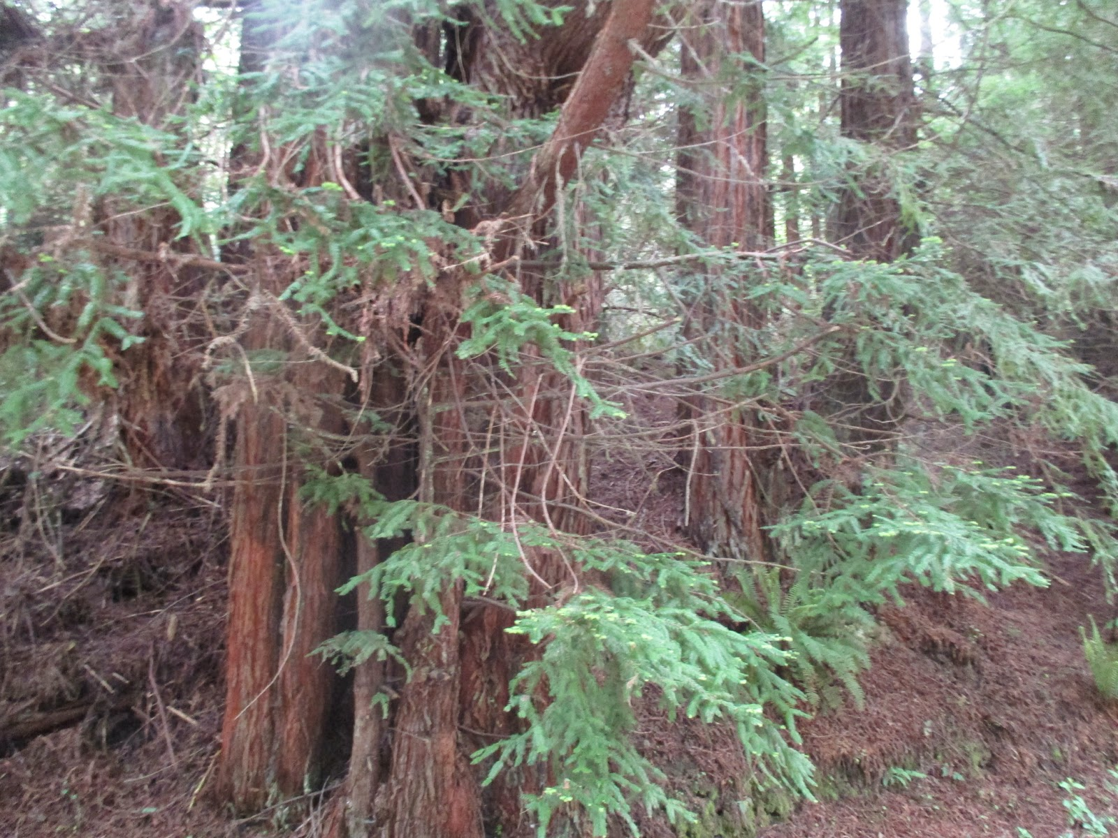 Virtual Tour Redwood Forest