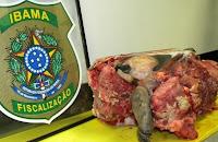 Ibama apreende carne de tartaruga com Secretário de Meio Ambiente