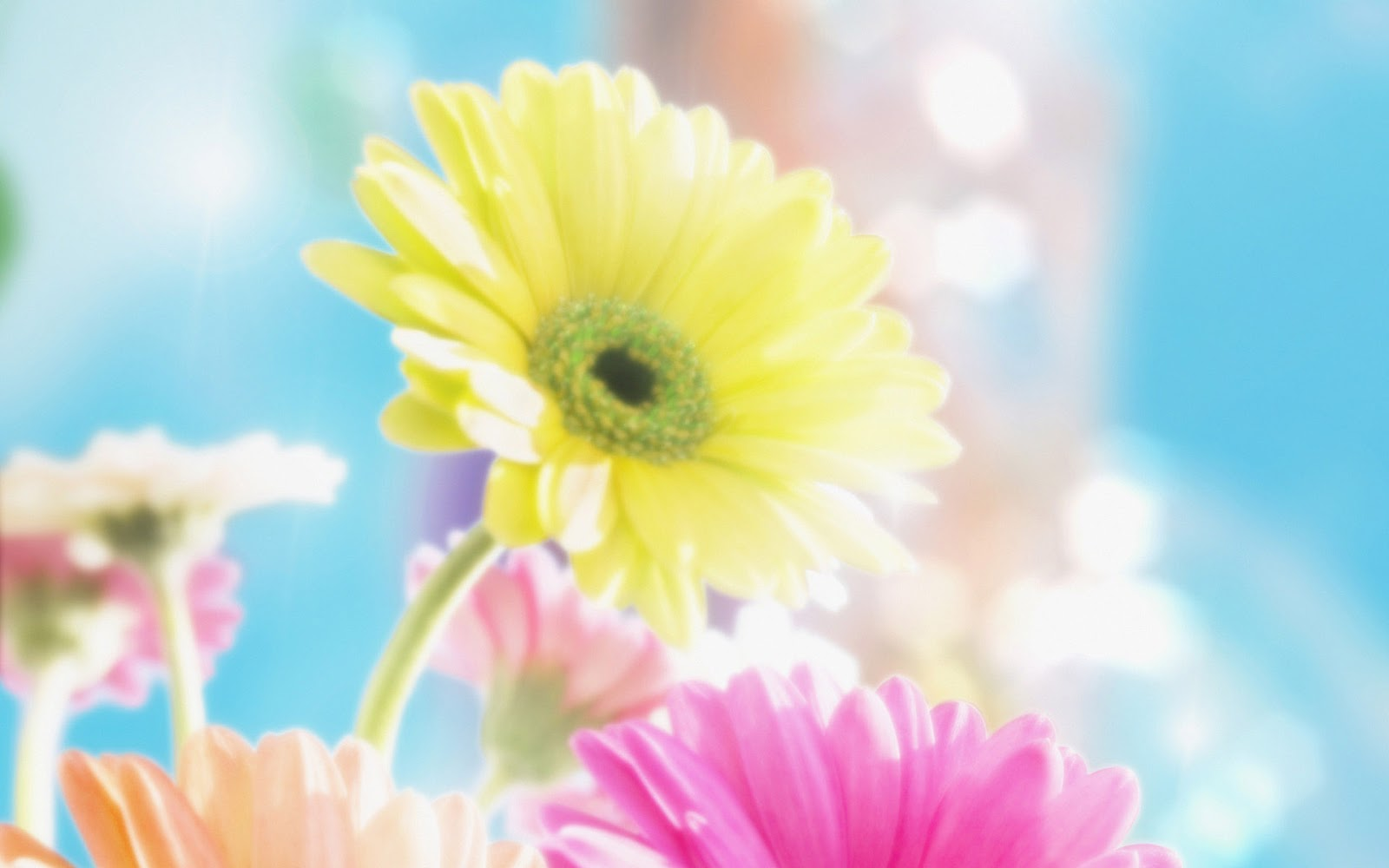 flowers for flower lovers.: Flowers background desktop ...