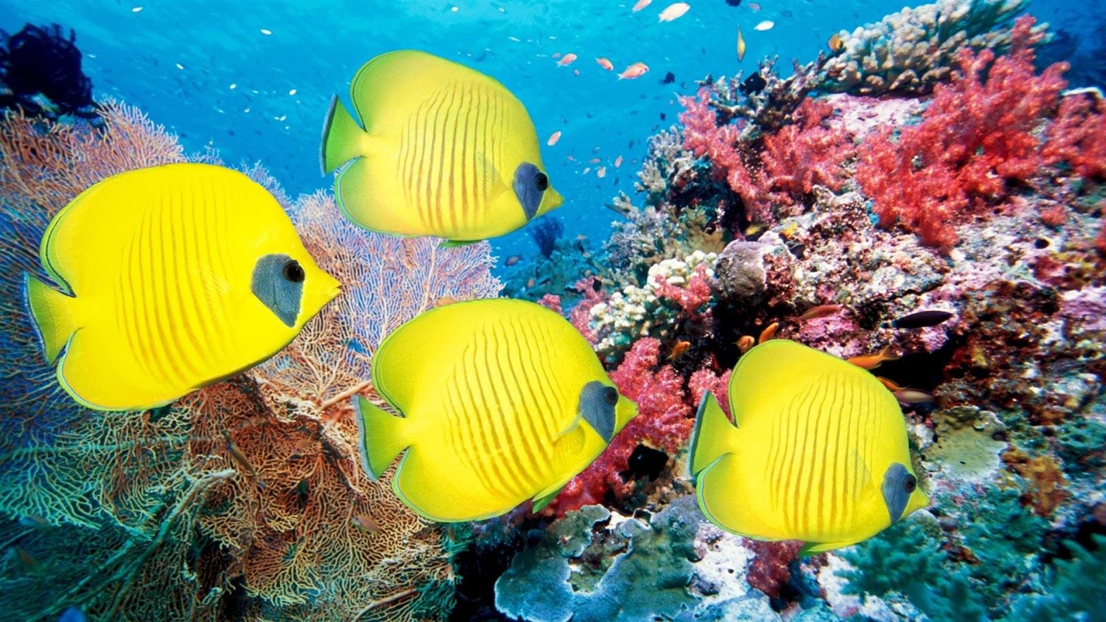 Te lo digo y te lo comento cuidando a los peces tropicales - Peces tropicales fotos ...