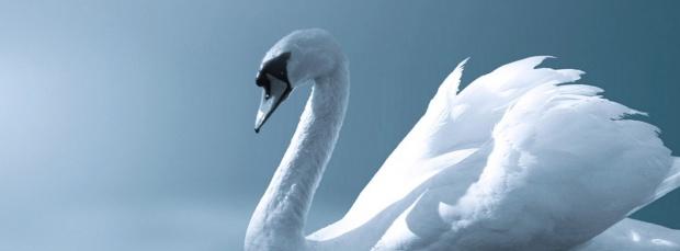 guzel kus facebook kapak resimleri+%252823%2529 35 En Güzel Facebook Kuş Kapak Resimleri indir