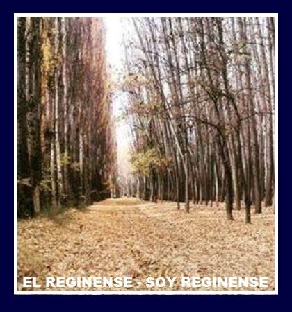 EL REGINENSE - SOY REGINENSE.