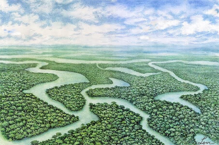 Imensidão amazônica