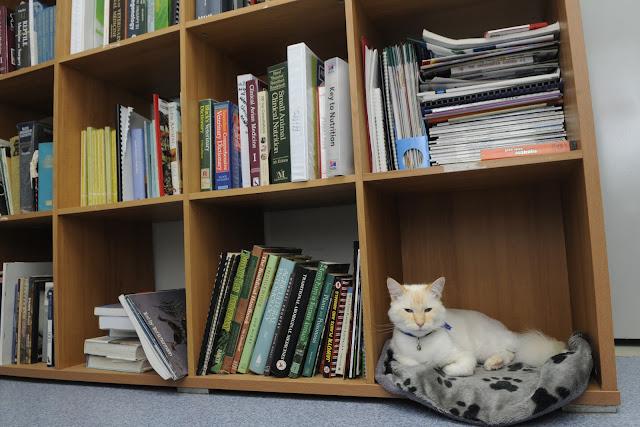 exam tips for veterinarians