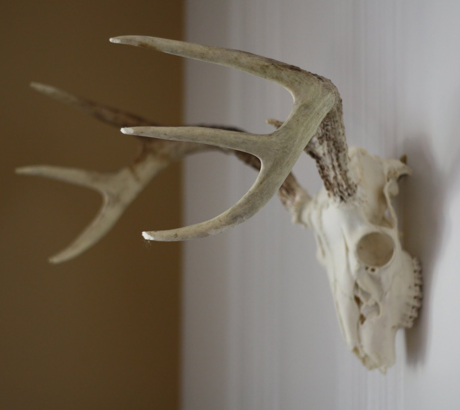 17 apart how to clean and wall mount deer antlers we decided wed like to keep them in their natural form and wanted to wall mount them in a small space in our living room that needed a little updating amipublicfo Image collections