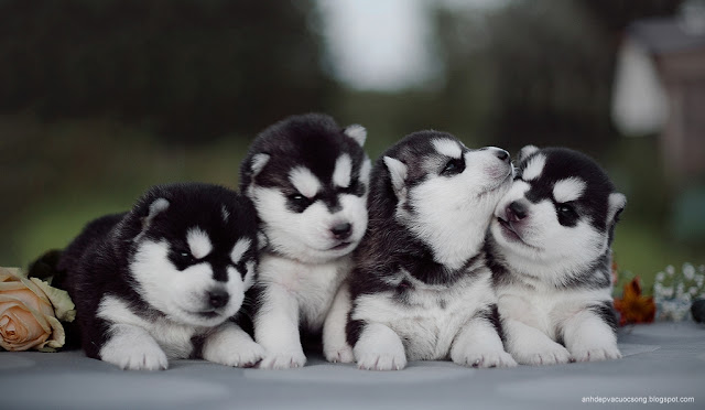 Ảnh những chú cún cưng đáng yêu