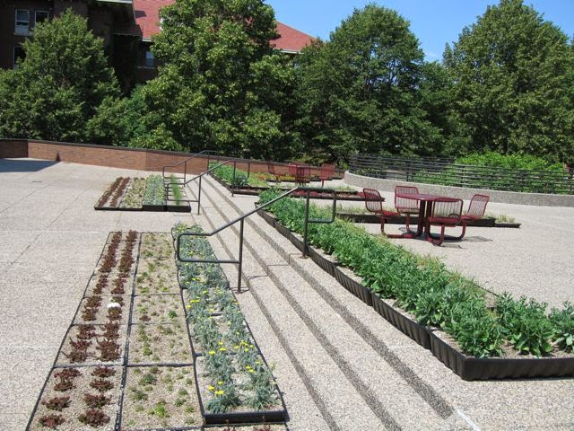 """green roof"" plantings at UMN"