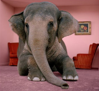 Frankie 39 S Amazon Adventure The Elephant In The Room