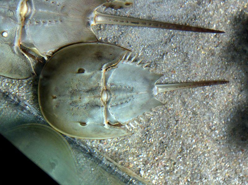 Resultado de imagen de los trilobites, esos monarcas