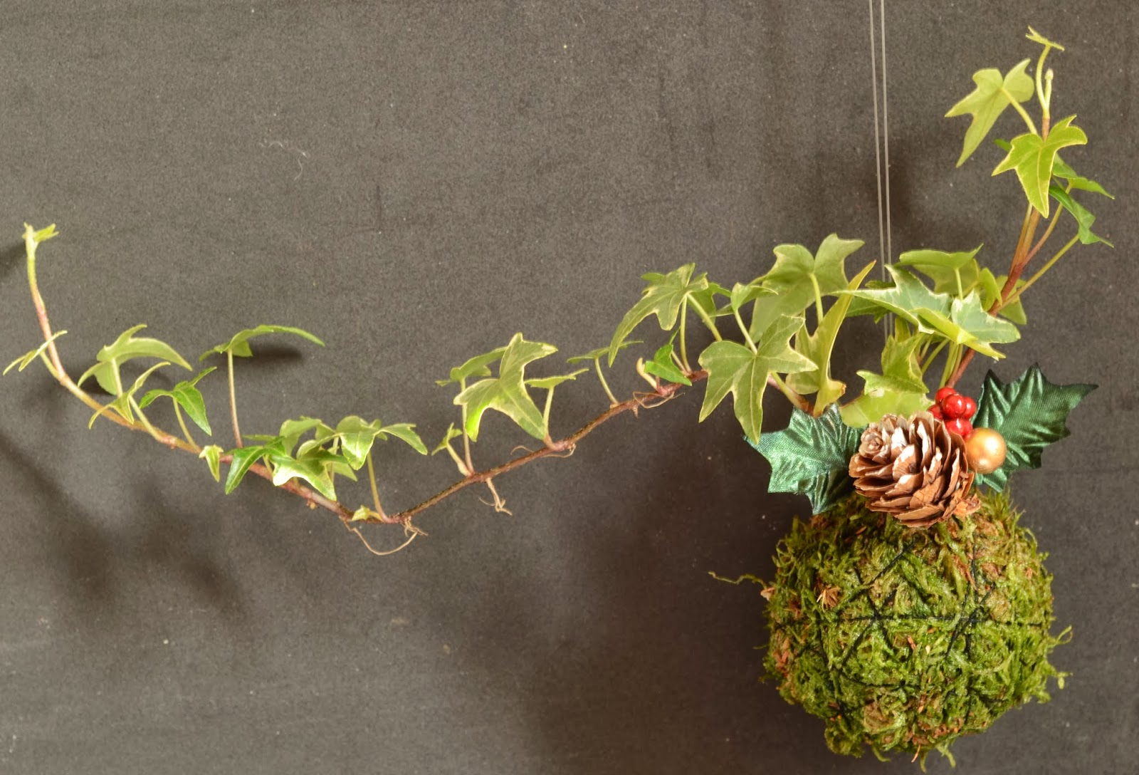 kokedama et petit bonsai kokedama suspendu. Black Bedroom Furniture Sets. Home Design Ideas