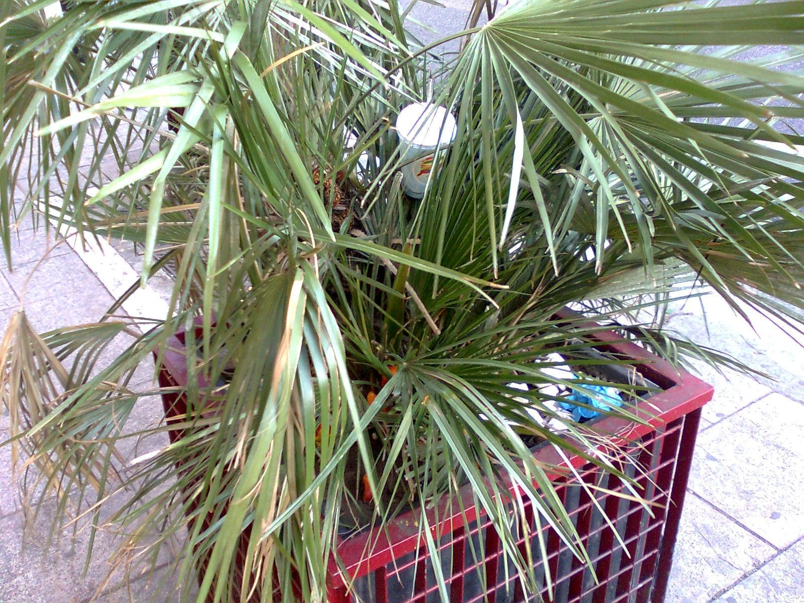 Degrado marconi nuove piante a viale marconi basta con i for Piante secche ornamentali