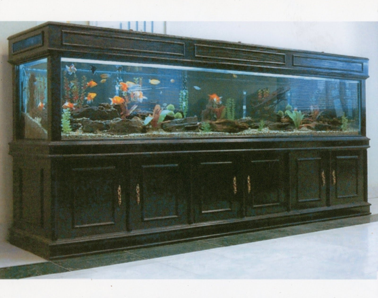 Fish aquarium karachi - Fish Aquarium Karachi