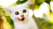 #9 Cute Animal Wallpaper