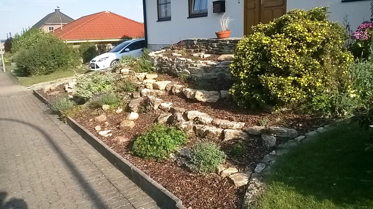 Steingartenpflanzen immergrun - Steingartenpflanzen anlegen ...