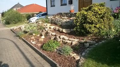 Garten anders - Steingartenpflanzen immergrun ...