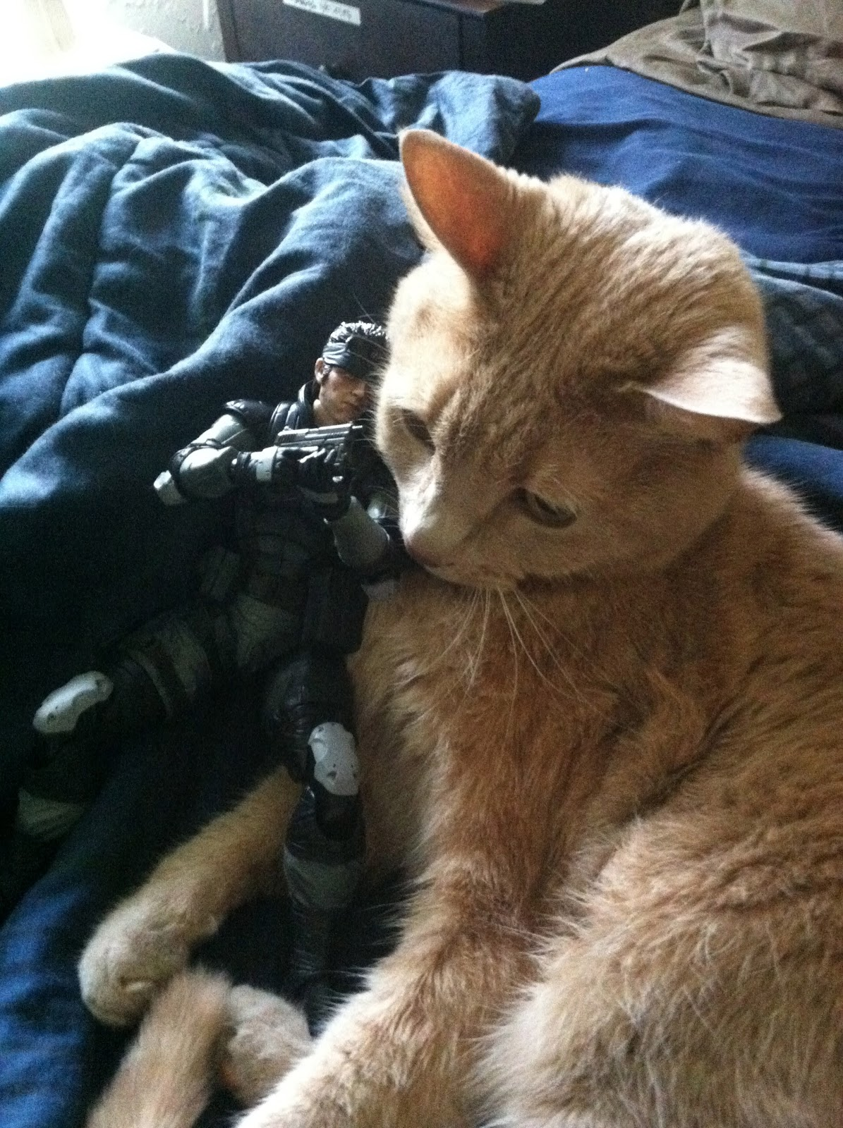 Allie the Cat and Solid Snake