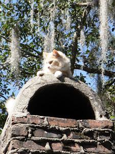 Aralia Lane's Watch Cat