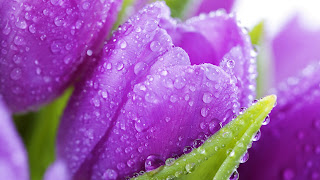 Beautiful Spring Flower Drops Awesome HD Love Wallpaper