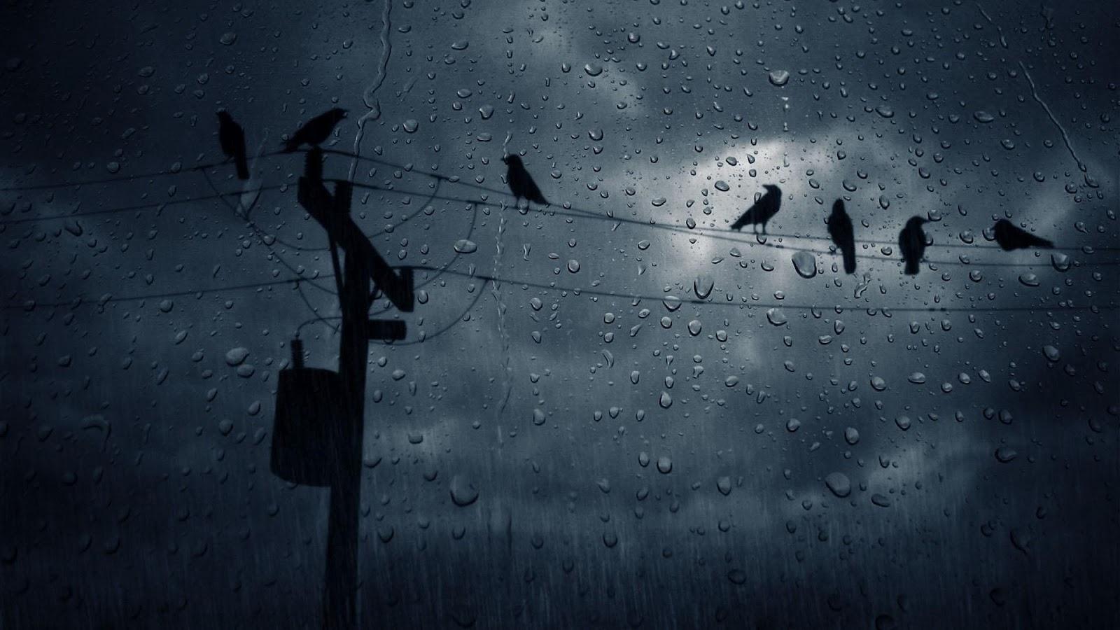 rain rain hd rain hd wallpapers rain hd pics rainy