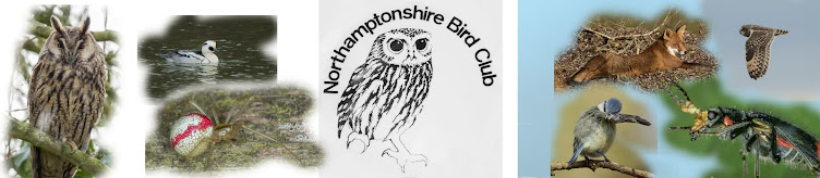 Northamptonshire Bird Club