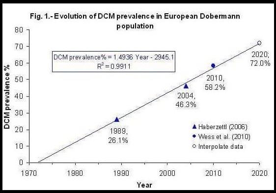 Impactul DCM-ului la doberman (65 din 100 de dobermani mor tineri in 2016 de DCM)