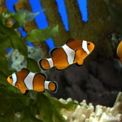 Bloggerchujwoww peces de colores for Peces de acuario marino