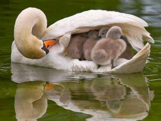 Mamá, unas alas que cobijan.
