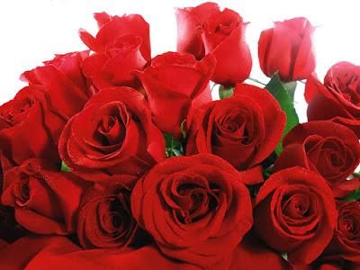 Rosas pra você