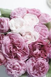 Roser fra hagen