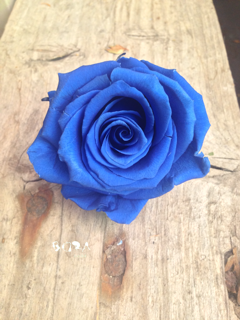 rosa azul par ramo de novia