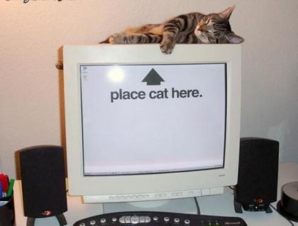 Kumpulan Foto dan Gambar Gambar Lucu Kucing