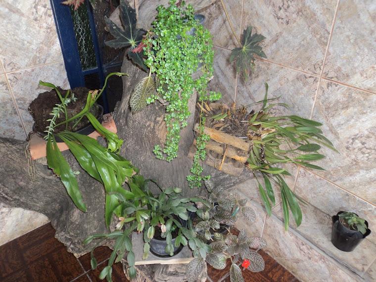 Tronco de árvore que usei para colocar vasos com plantas