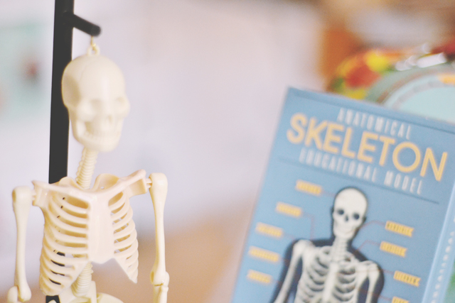 Model of mini anatomical skeleton