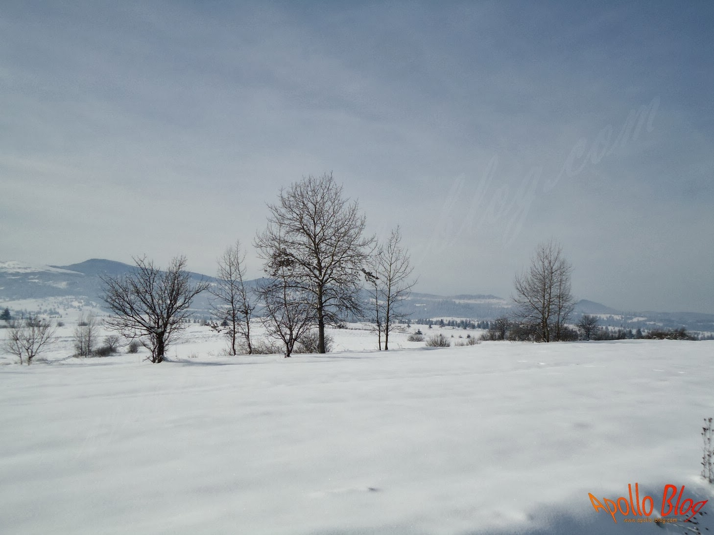 Copaci iarna