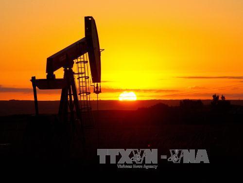 """Năm 2016, liệu giá dầu thô có ngừng """"lao dốc""""?"""