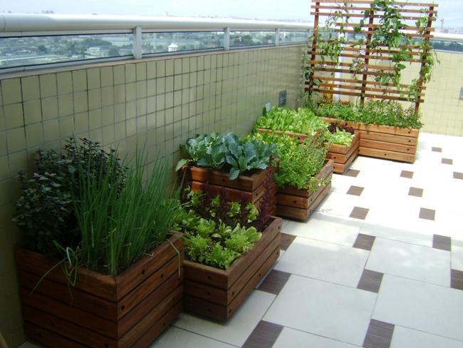 Comprando nosso Apê  Horta na varanda