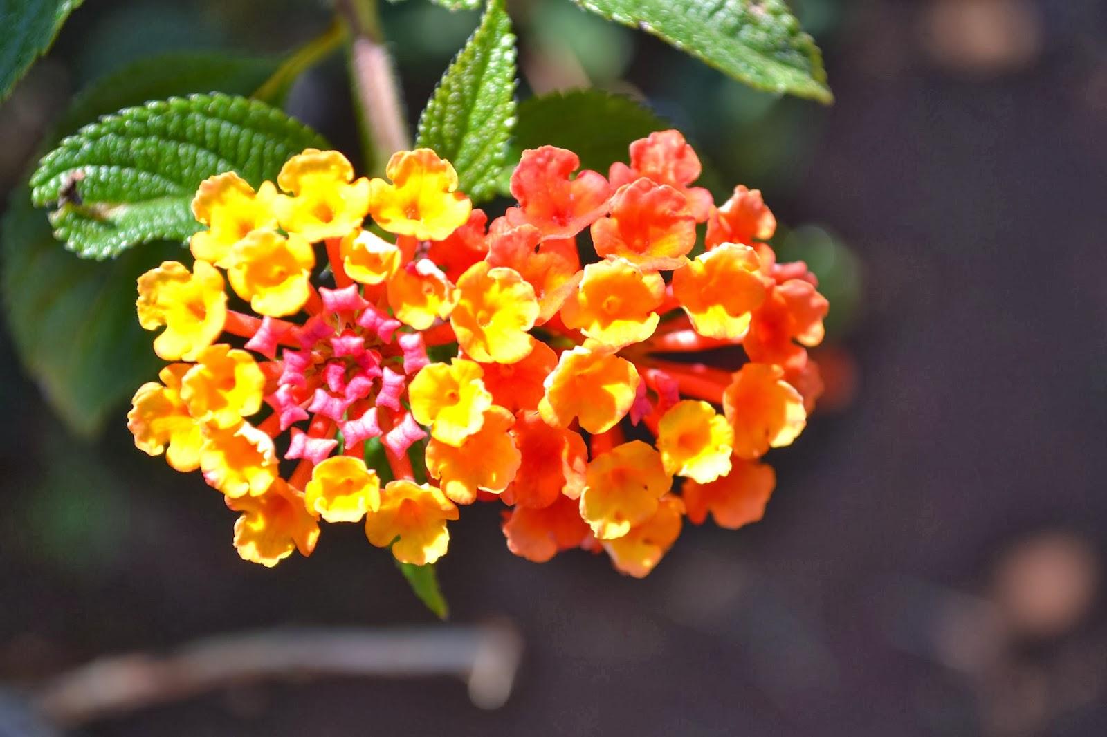 Bright yellow, orange and pink flowers
