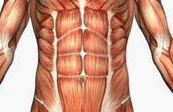 Cara Meratakan Perut Otot Perut