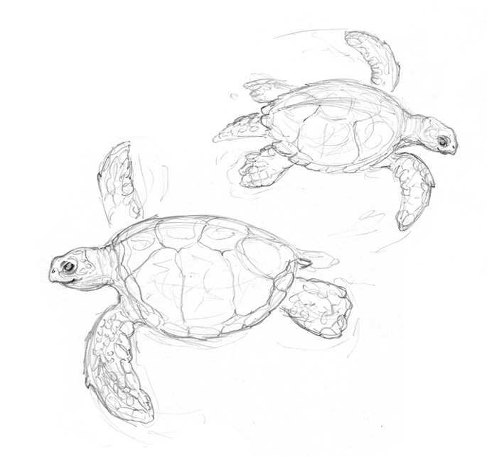 easy to draw cartoon turtle