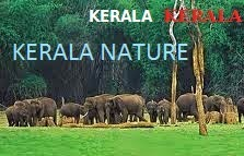 NATURE IN KERALA