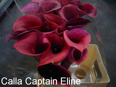 Calla Captain Eline bouquet