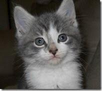 Maya, rescued kitten