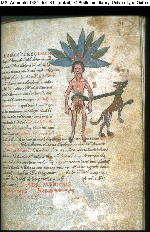 11th century  c
